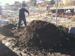 RRR.Paradise Park Compost2